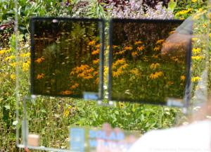 Natural view showing transparency of SolarWindow™ electricity-generating coating